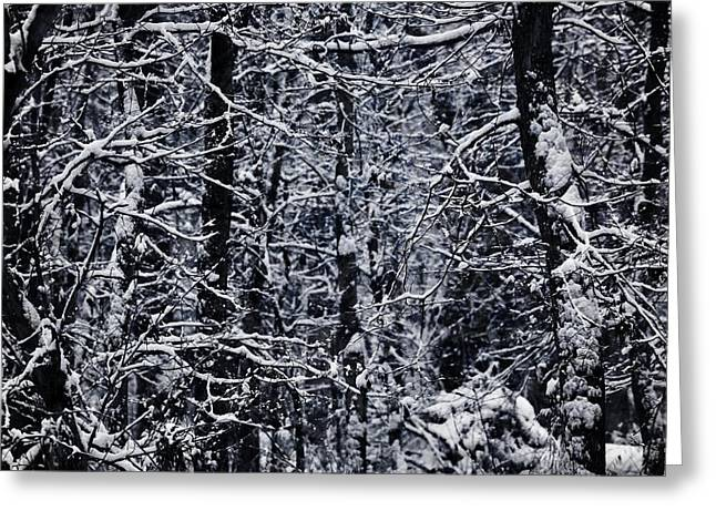 Trees In Winter Greeting Cards - Winter Forest Greeting Card by Dan Sproul