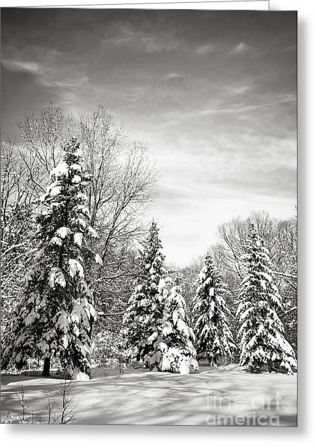 Winter Park Greeting Cards - Winter forest in black and white Greeting Card by Elena Elisseeva