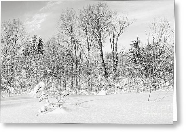 Winter Forest Landscape Greeting Card by Elena Elisseeva