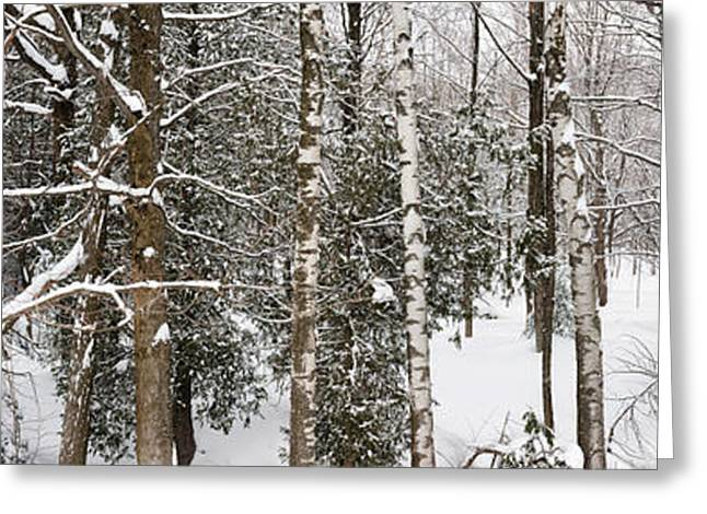 Snowstorm Greeting Cards - Winter forest landscape panorama Greeting Card by Elena Elisseeva
