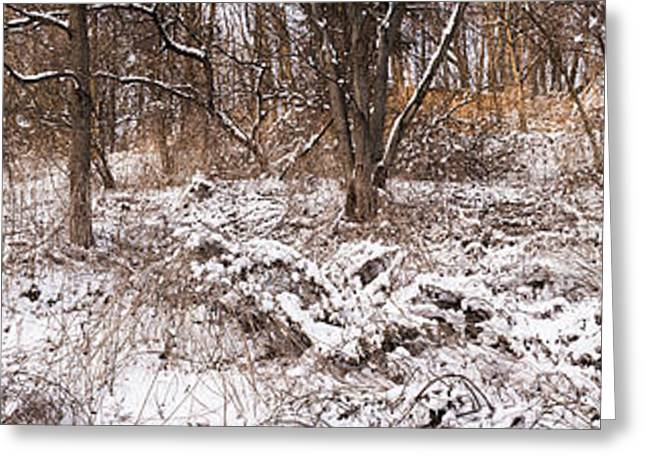 Park Scene Greeting Cards - Winter forest panorama Greeting Card by Elena Elisseeva