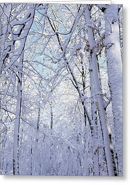 Bare Branches Greeting Cards - Winter Forest Greeting Card by Panoramic Images