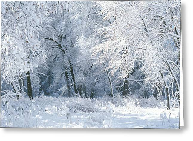 Wintry Greeting Cards - Winter, Forest, Yosemite National Park Greeting Card by Panoramic Images
