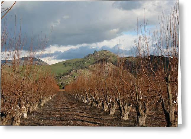 Marsha Ingrao Greeting Cards - Winter Fruit Orchard Greeting Card by Marsha Ingrao
