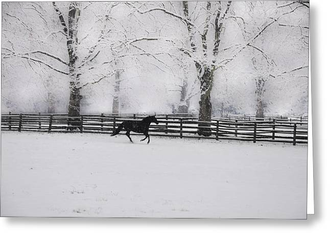 Erdenheim Farm Greeting Cards - Winter Glory Greeting Card by Bill Cannon