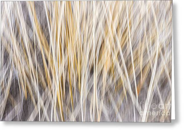 Blurred Background Greeting Cards - Winter grass abstract Greeting Card by Elena Elisseeva