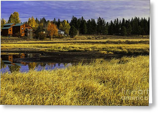 Winter Grasses And Low Lying Wetlands Greeting Card by Nancy Marie Ricketts