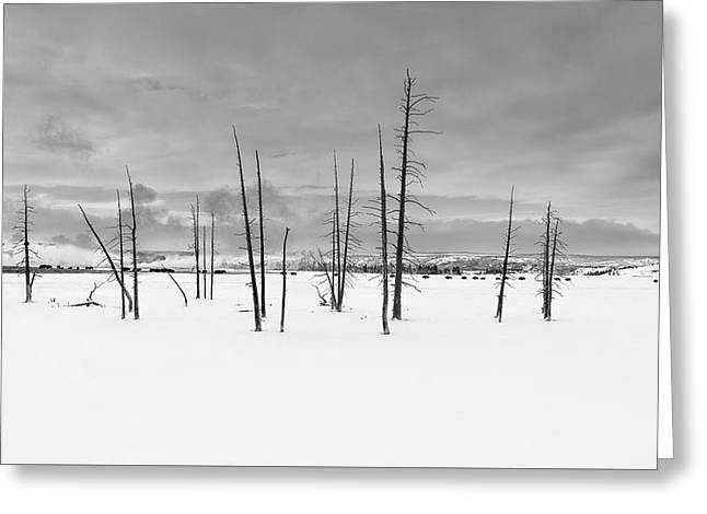 Grazing In Winter Yellowstone National Park Greeting Card by James Hammond
