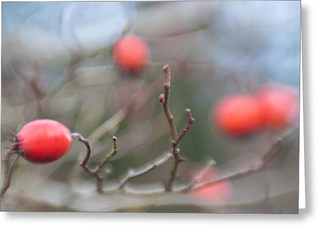 Depth Of Field Greeting Cards - Winter Hawthorn Greeting Card by Scott Campbell
