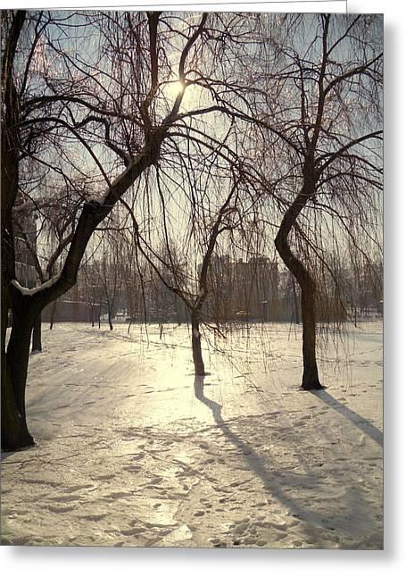 Willows In Winter Greeting Card by Henryk Gorecki