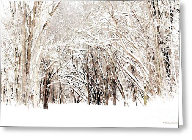 Overhanging Snow Greeting Cards - Winter Hiking Trail Greeting Card by Barbara McMahon