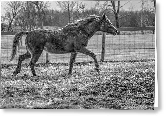 Tennessee Barn Greeting Cards - Winter Horse 03 BW Greeting Card by J M Lister