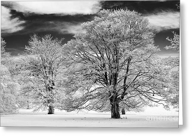 Bare Oak Tree Greeting Cards - Winter Horse Chestnut Trees Monochrome Greeting Card by Tim Gainey