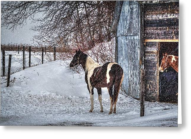 Old Maine Barns Greeting Cards - Winter Horse Hideout Greeting Card by Gary Smith