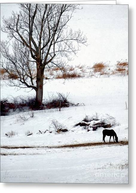 Grazing Snow Greeting Cards - Winter Horse Pasture 1 Greeting Card by Janine Riley