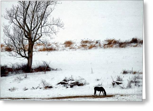 Grazing Snow Greeting Cards - Winter Horse Pasture 2 Greeting Card by Janine Riley