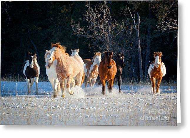 Folks Humans Greeting Cards - Winter Horses Greeting Card by Inge Johnsson