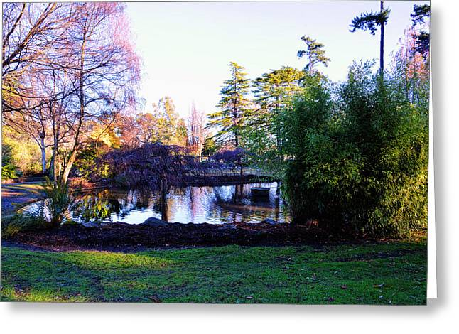 Primroses Greeting Cards - Winter in Beacon Hill Park Victoria BC Greeting Card by Lawrence Christopher