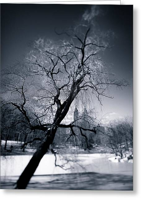 Winter Scene Photographs Greeting Cards - Winter in Central Park Greeting Card by Dave Bowman
