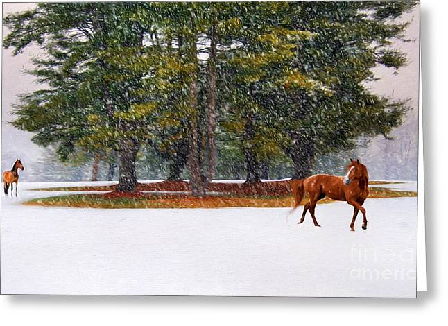 Snow-covered Landscape Greeting Cards - Winter in Horse Country Greeting Card by Darren Fisher