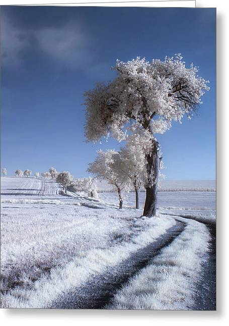 Winter In Summer Greeting Card by Piotr Krol (bax)