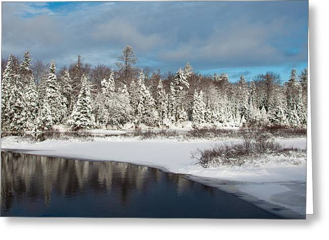 Evergreen Covered In Snow Greeting Cards - Winter in the Adirondack Mountains Greeting Card by David Patterson