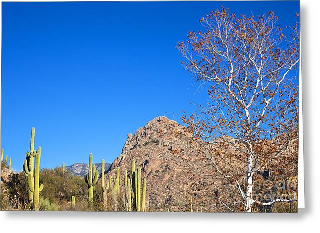 Catalina Mountains Greeting Cards - Winter In The Catalinas Greeting Card by Richard & Ellen Thane
