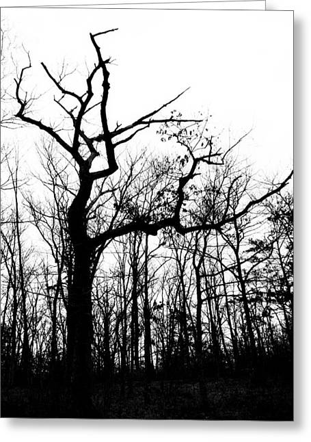 Black Greeting Cards - Winter in the Forest Greeting Card by Heather Bridenstine