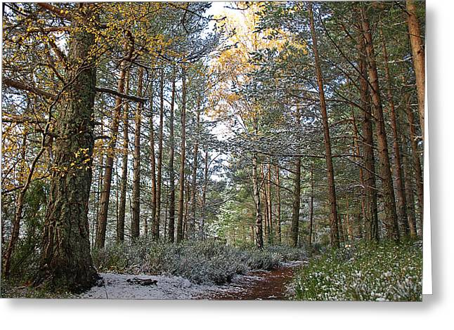 Highlands Of Scotland Greeting Cards - Winter In The Forest Near Aviemore Greeting Card by Gill Billington
