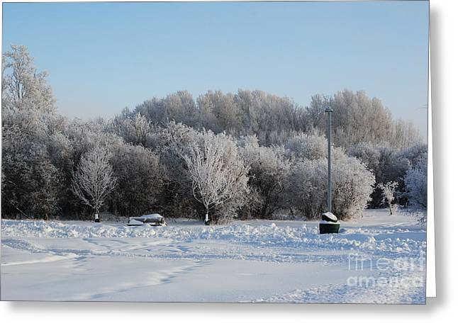 Powder Greeting Cards - Winter in the Park Greeting Card by TChamberlin Photography