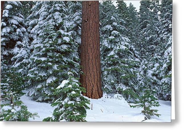 Winter In The Sierra Mountains Greeting Card by Panoramic Images