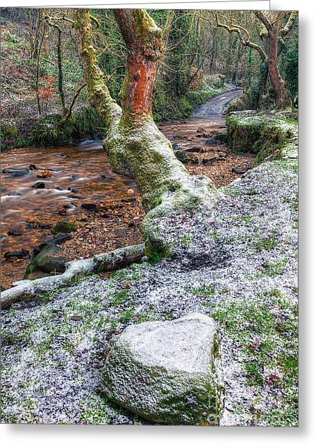 Stream Digital Greeting Cards - Winter in the Woods Greeting Card by Adrian Evans