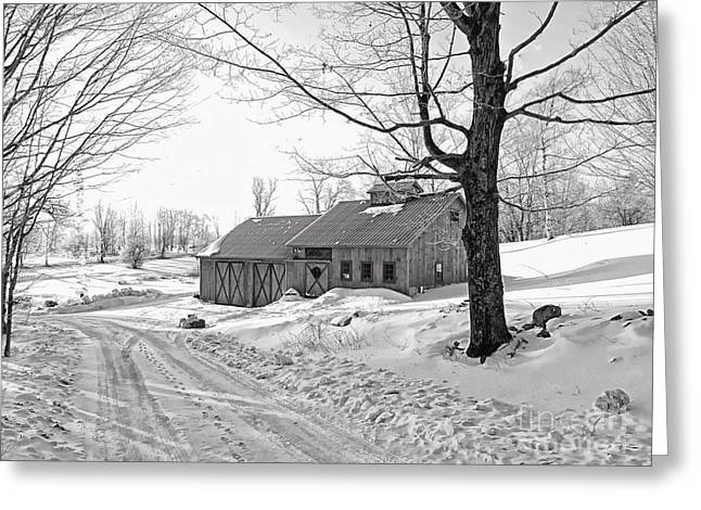 Marcia Lee Jones Greeting Cards - Winter In Vermont Greeting Card by Marcia Lee Jones