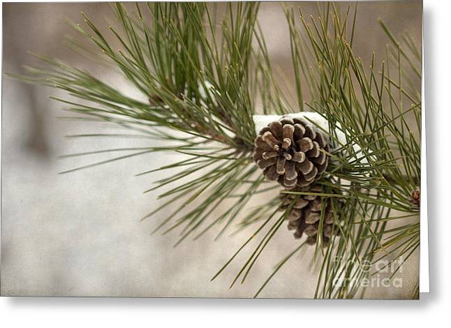 Pines Greeting Cards - Winter Interlude Greeting Card by Evelina Kremsdorf