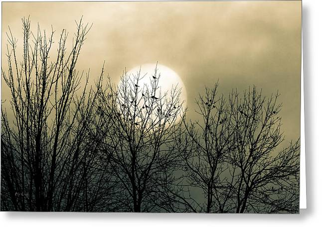 Birds Moon Greeting Cards - Winter Into Spring Greeting Card by Bob Orsillo