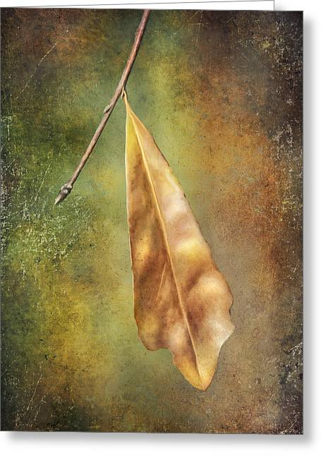 Colors Of Autumn Greeting Cards - Winter is Coming Greeting Card by Brenda Bryant