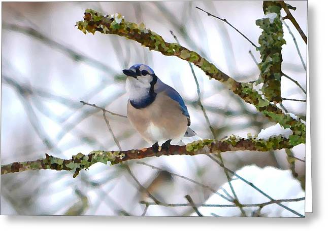 Wintry Greeting Cards - Winter Jay Greeting Card by Deena Stoddard