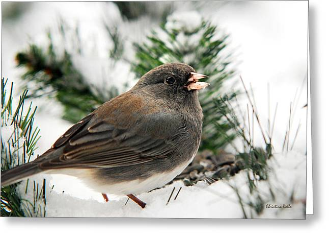 Birds In Snow Greeting Cards - Winter Junco Greeting Card by Christina Rollo