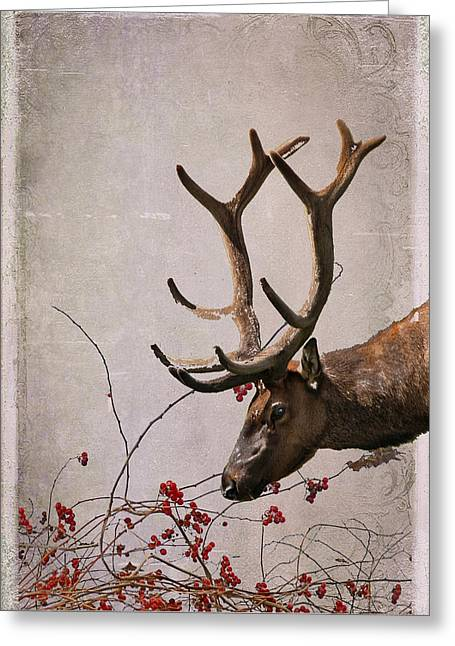 Julie Magers Soulen Greeting Cards - Winter King Greeting Card by Julie Magers Soulen