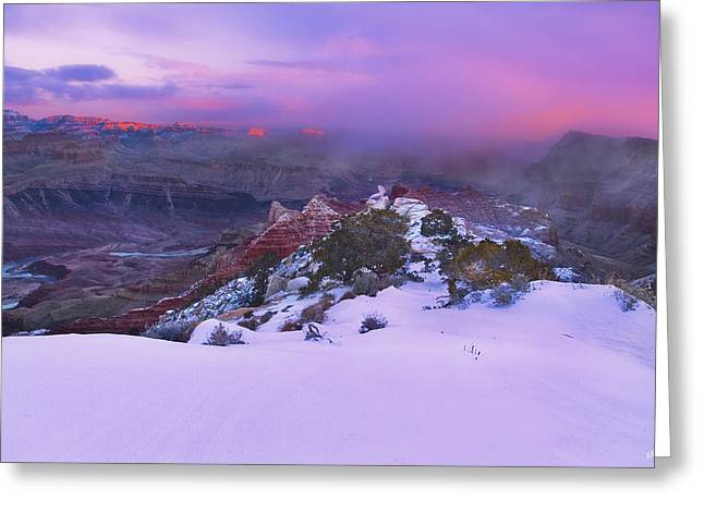 Winter Kiss Greeting Card by Peter Coskun