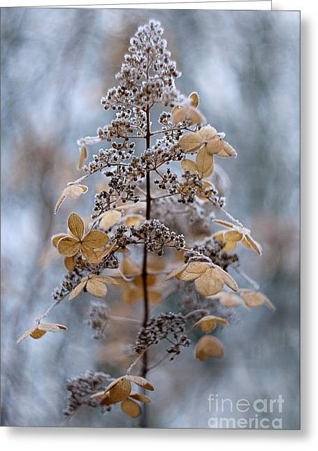 Close Focus Floral Greeting Cards - Winter Lace Greeting Card by Jacky Parker