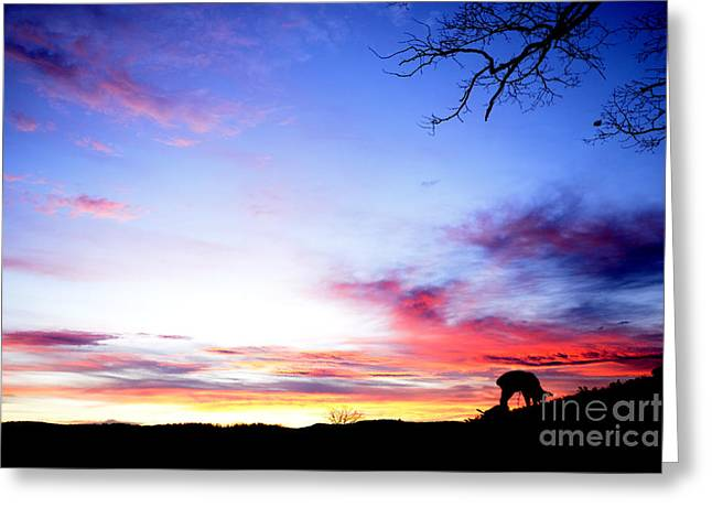 Colorful Cloud Formations Digital Greeting Cards - Winter Lamb Sunrise Greeting Card by Thomas R Fletcher