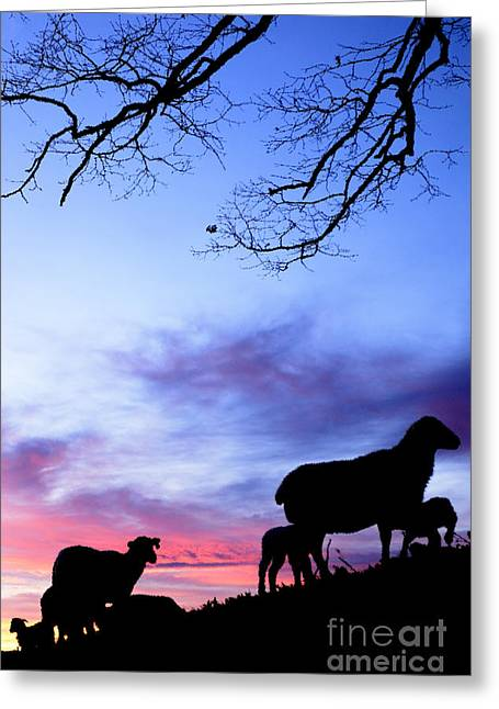 Colorful Cloud Formations Digital Greeting Cards - Winter Lambs and Ewes Sunrise Greeting Card by Thomas R Fletcher