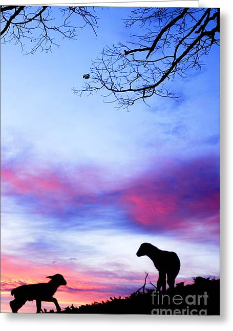 Colorful Cloud Formations Greeting Cards - Winter Lambs Sunrise Greeting Card by Thomas R Fletcher