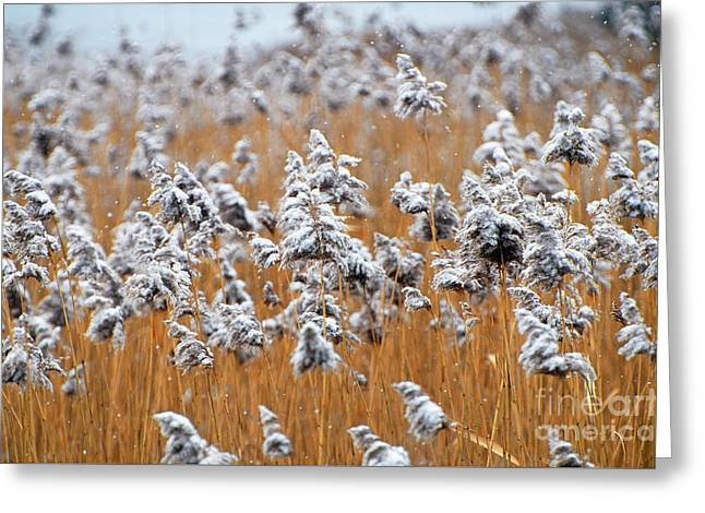 North Fork Greeting Cards - Nature Winter Landscape Photography -  Greeting Card by ArtyZen Studios - ArtyZen Home