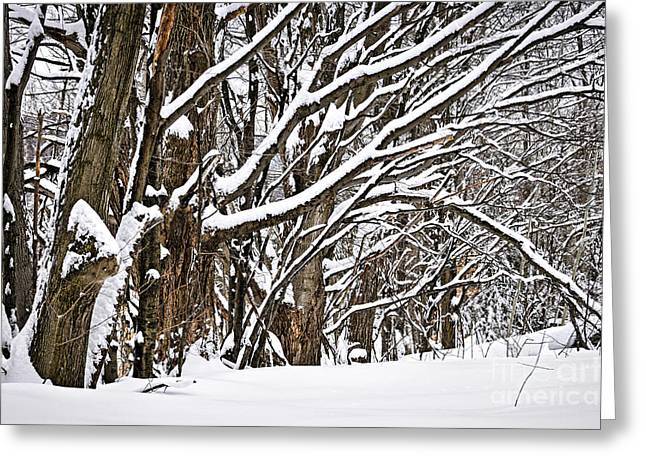 Winter Park Greeting Cards - Winter landscape Greeting Card by Elena Elisseeva