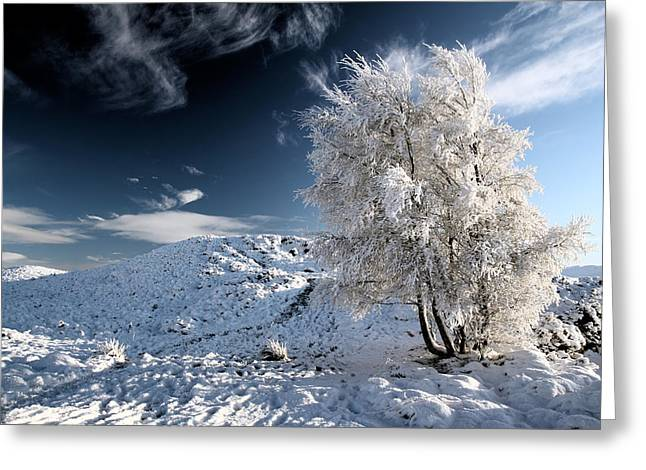 Snow Scenes Greeting Cards - Winter Landscape Greeting Card by Grant Glendinning