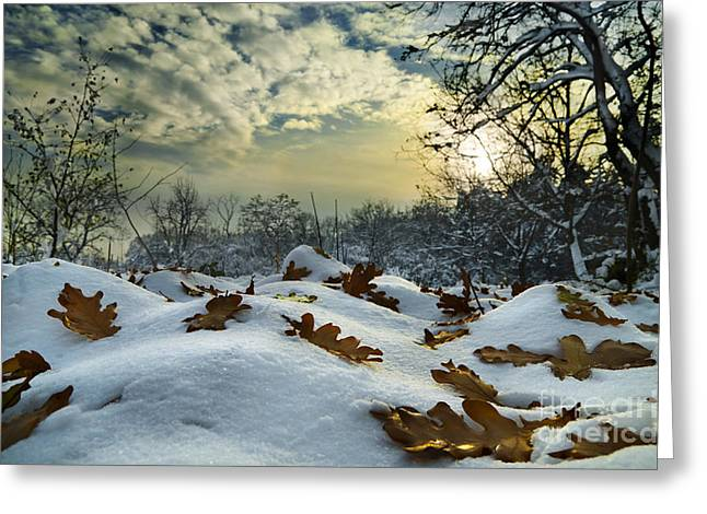 View Pyrography Greeting Cards - Winter Landscape Greeting Card by Jelena Jovanovic