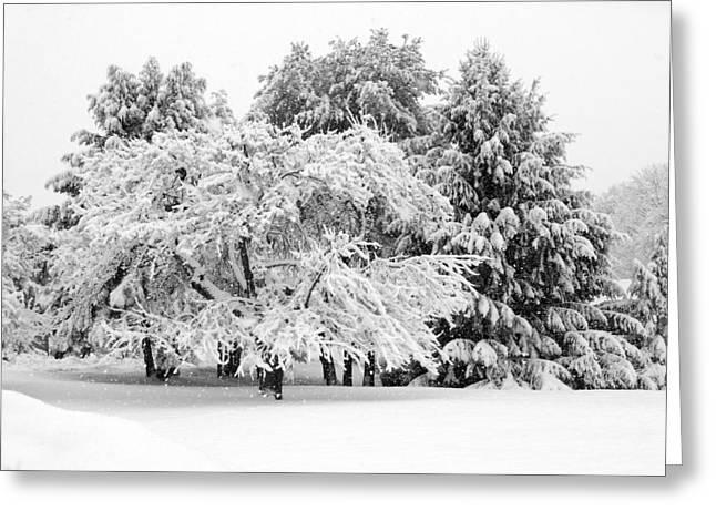 Evergreen With Snow Greeting Cards - Winter Landscape Maine Number One Greeting Card by Patricia Sundik