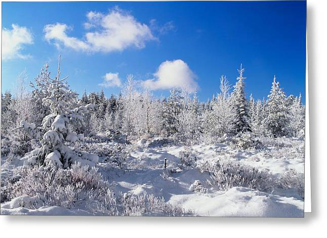 Reserve Greeting Cards - Winter Landscape, Nature Reserve Greeting Card by Panoramic Images